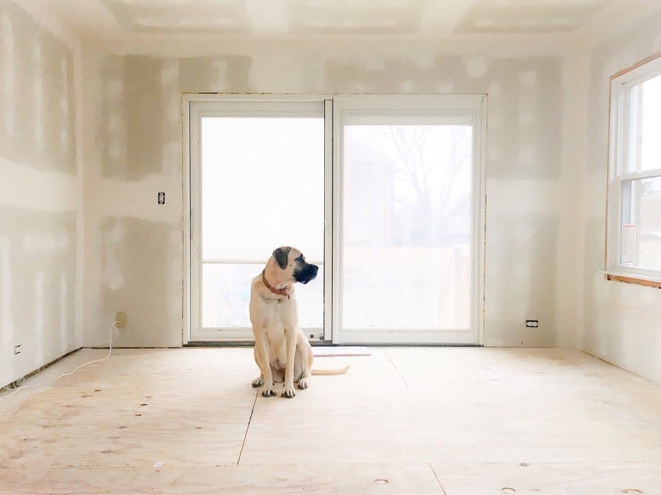 english-mastiff-dog-sitting-on-bare-floor-in-bare-room-with-fresh-drywall-and-bright-light
